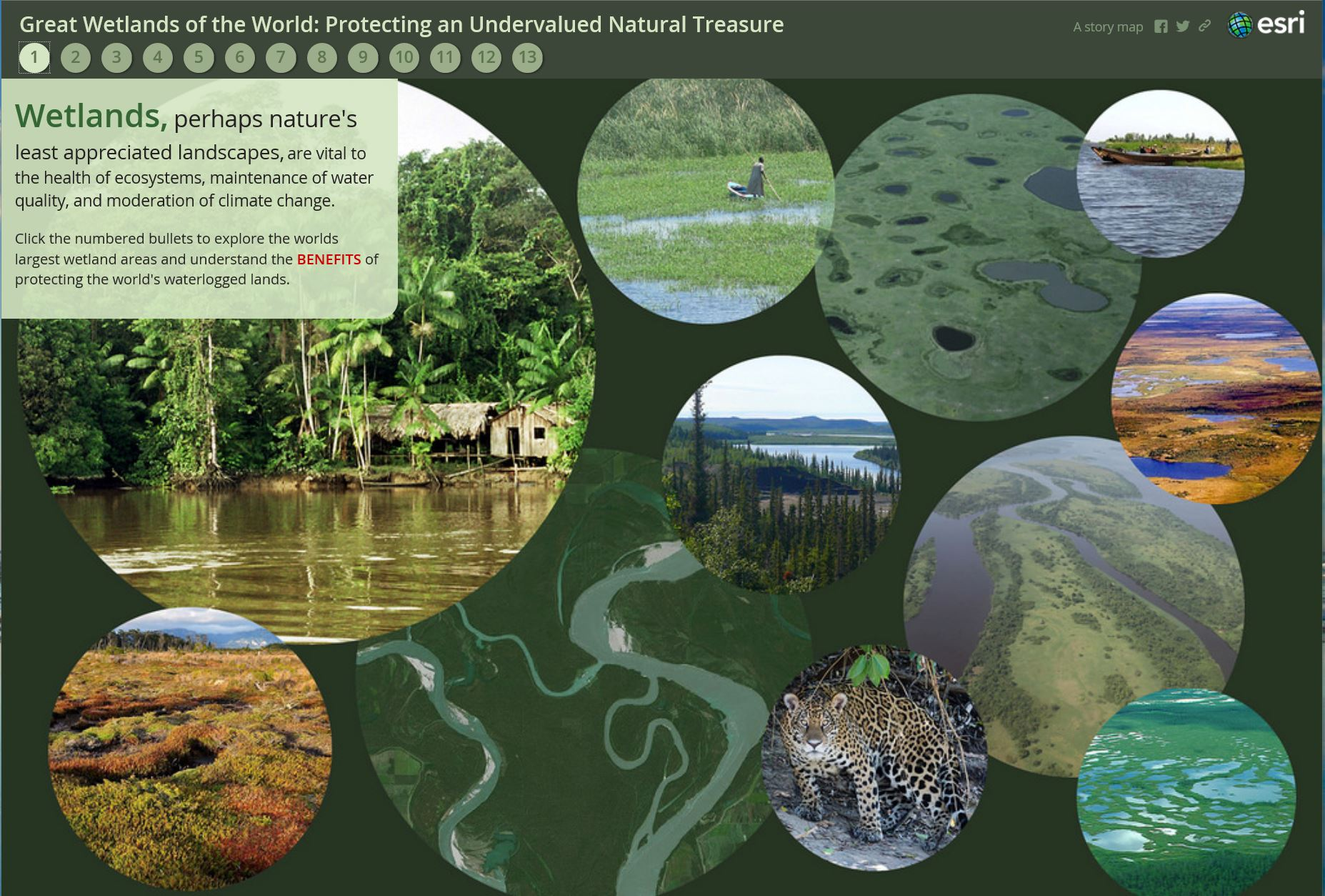 Wetland Story Map Sample